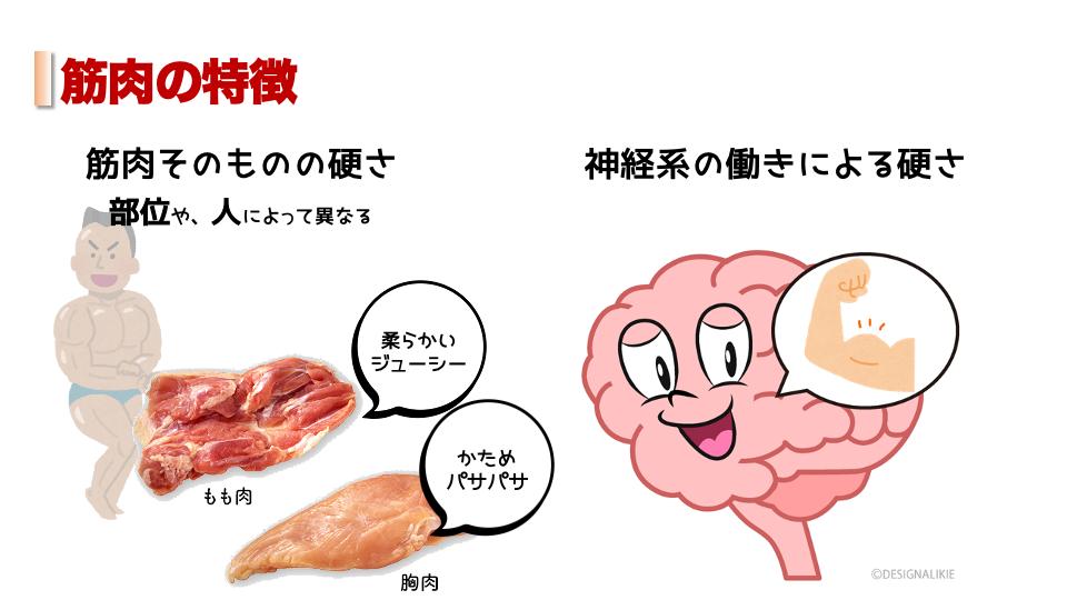 筋肉の特性